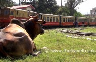 SHIMLA TOY TRAIN IS A GREAT RAIL JOURNEY