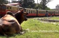 SHIMLA TOY TRAIN IS A GREAT RAIL JOURNEY
