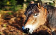 GO NEW FOREST - ALL YEAR ROUND!